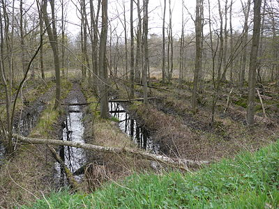Voorbeeld van een volgroeid Rabattenbos
